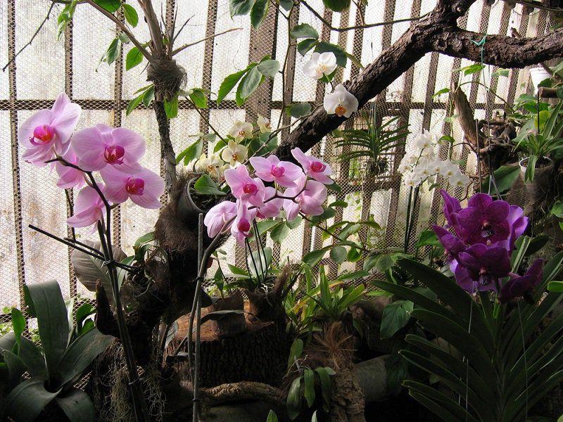 Ботанический сад харьков купить цветы доставка цветов петербург улица звёздная