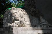 Львів – місто царя звірів