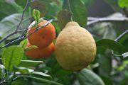 Оранжереї, ботанічні сади і теплиці: насолоджуємося жаркими тропіками в Україні