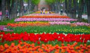 Умань и парк тюльпанов в Кропивницком