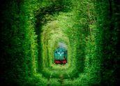 Тунель кохання та Тараканів