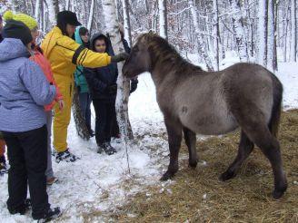 Парк природи Беремицьке: в гості до тарпанів та диких котів