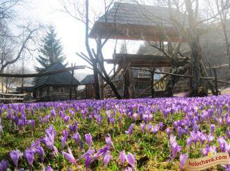 Тур в Карпати на 2 дні: Синевир, Колочава+Долина крокусів