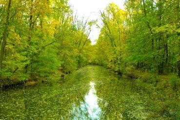 Трикратский лес