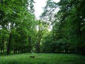 Качанівка - Тростянець - Сокиринці - дворянські садиби