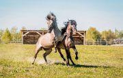 Дикие кони и хищные растения