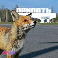 Однодневный тур в Чернобыль