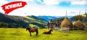 МЕГА-тур в Карпаты. 7 дней отдыха в Ворохте