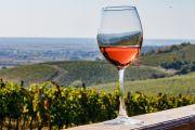 Wine story в Закарпатті