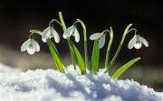 Найгарніші та найнезвичайніші квіти в Україні: де і коли побачити цвітіння