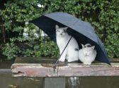 Харьков: маршрут хорошего настроения в плохую погоду