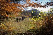 Золотая осень в Карпатах: 5 лучших маршрутов по буковым лесам