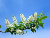 Как провести майские праздники 2015 в Киеве