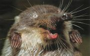 Невідома Україна: 11 рідкісних представників фауни