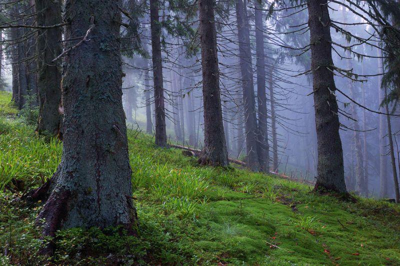 Найкрасивіші ліси України