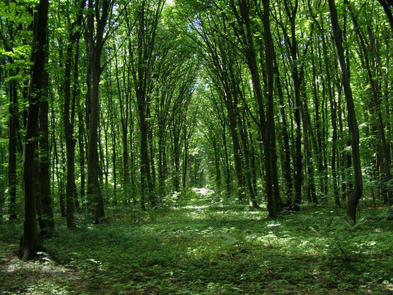 фото лісу україни