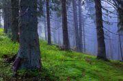 Самые красивые леса Украины