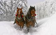8 романтичних мандрівок на Буковину взимку