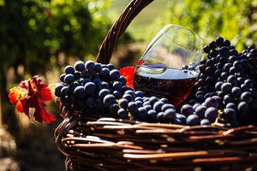Свята молодого вина в Шато Чизай