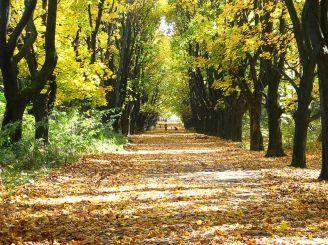 Снопковский парк, Львов