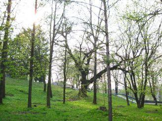 Горохівський парк