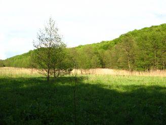 Лесной заказник Гряда