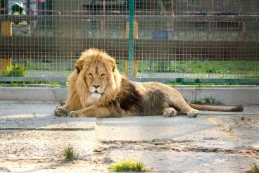Зоопарк «Лимпопо», Меденичи