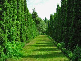 Васютинский дендрологический парк