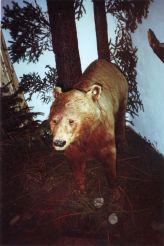 Музей бурого ведмедя, Манява