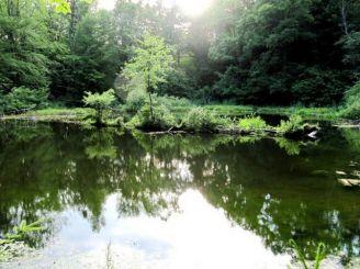Swan Lake Sheshori