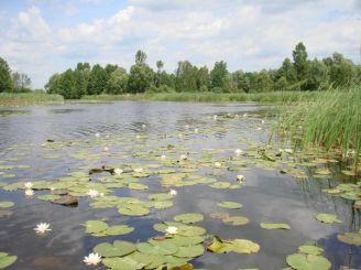 Dneprovsko-Teterevsky reserve