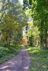 Парк Трощинских, Кагарлык