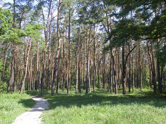 Голосеевский лес, Киев