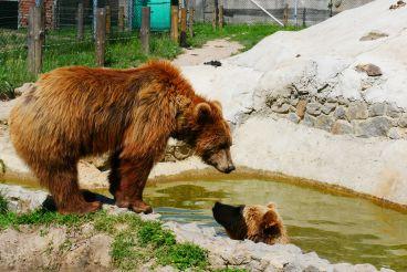 Центр спасения медведей «Надежда», Березовка