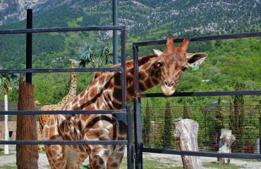 Yalta Zoo Tale