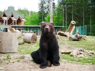 Rehabilitation center of the brown bear, Sinevir
