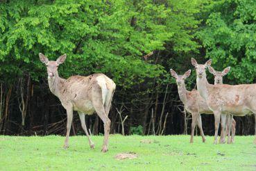 Центр реабілітації диких тварин Галицького національного природного парку, Крилос