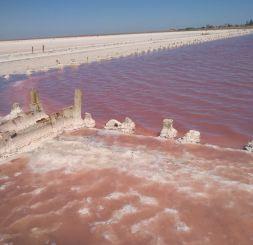 Рожеве солоне озеро, Приозерне