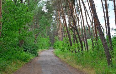 Obukhov (Kirov) forest