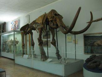 Национальный научно-природоведческий музей НАН Украины, Киев