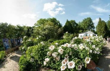 Ботанічний сад, Суми