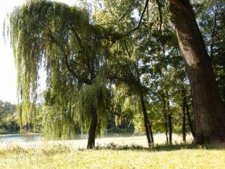 Веретенівський парк, Суми