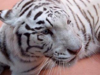 Zoo 12 months, Demidov