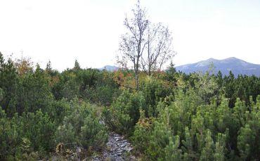 Тавпиширковский ботанический заказник