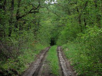 Савранский лес, Саврань