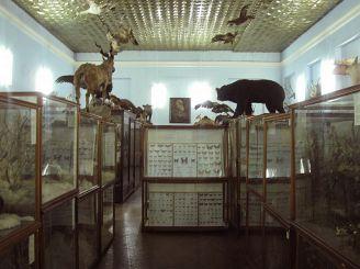 Зоологический музей ДНУ имени Олеся Гончара