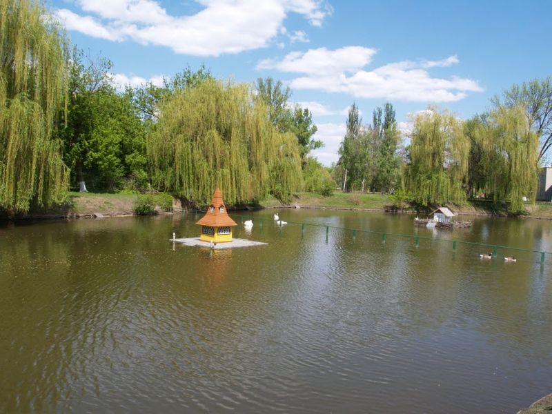 пруд лебеди фото