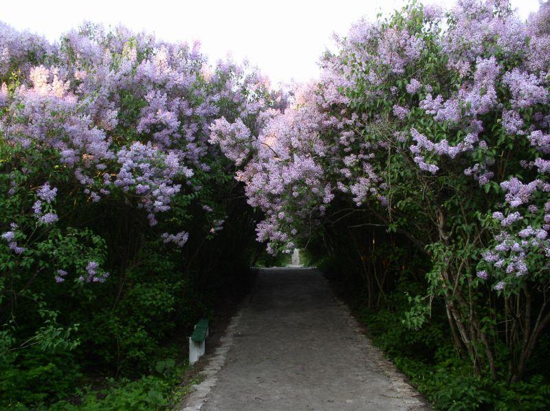 8623bc4f737b Lilac Garden