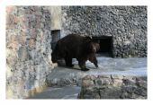 Камчатские медведи получили новый вольер в Николаевском зоопарке