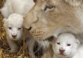 Think of names cub